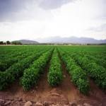farm-origin-rio-grande-valley